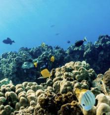 Hawaii interdit les crêmes solaires avec des produits chimiques qui endommagent les récifs coralliens